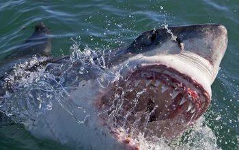 Why Shark Week is still lying
