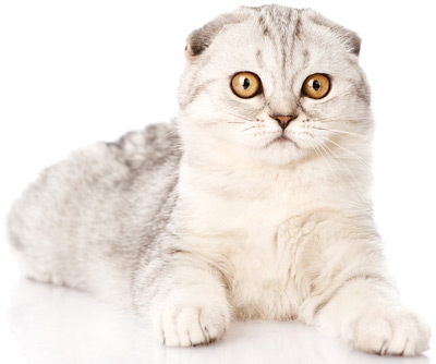 baffled cat