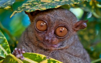 reality blurred tarsier