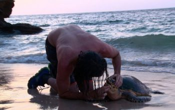 Turtle CPR makes a camera operator The Island's breakout star