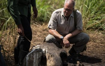 How a TV show may disrupt elephant poaching