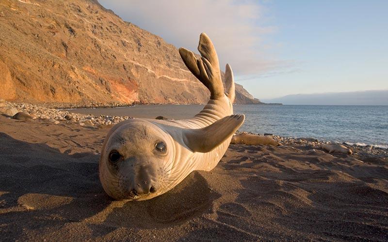 PBS BBC Big Blue Live elephant seal
