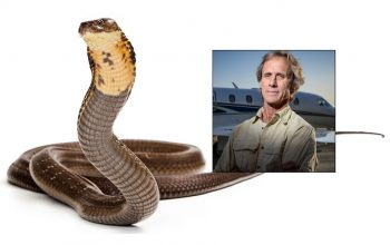 Reality star loses deadly snake, elementary school on lockdown