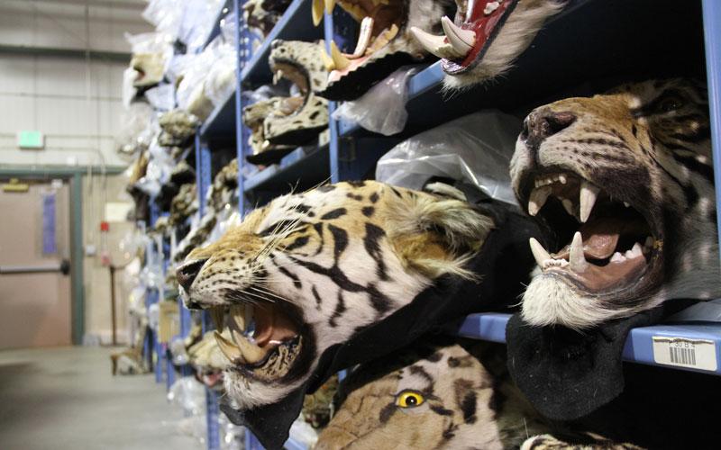 Racing Extinction National Wildlife Property Repository