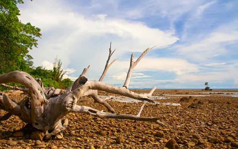 Australian Survivor Pulau Tiga