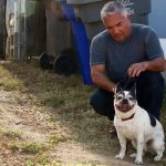 Cesar Millan's animal cruelty, dog-attacks-pig controversy, explained