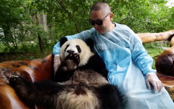 Eddie Huang, panda, Huang's World, Chengdu, China