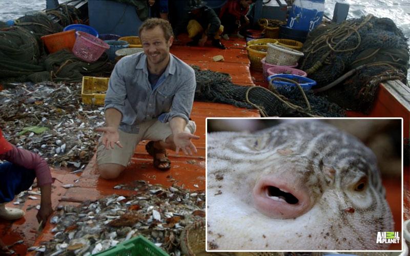 Ocean Warriors, Animal Planet, Jim Wickens