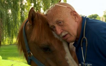 Incredible Dr. Pol, Copper the horse