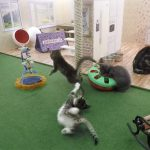 Live feeds, but with kittens! In a doll house! In Iceland!