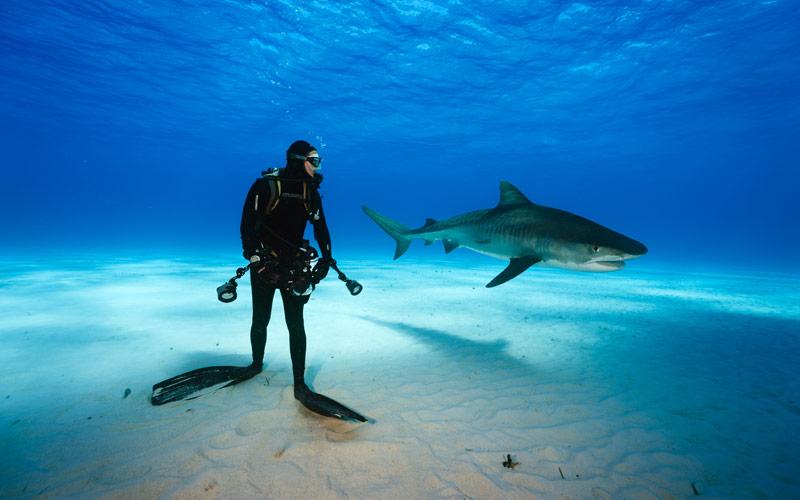 Sharks Under Attack, tiger shark, Tiger Beach, Bahamas