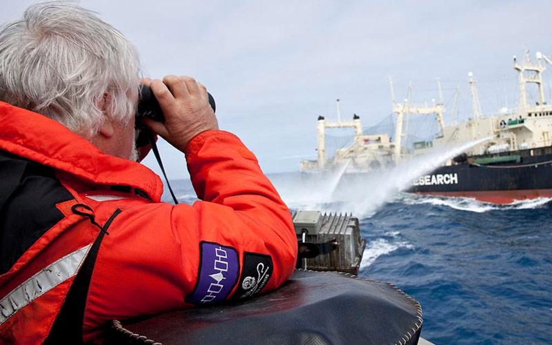 Paul Watson, Sea Shepherd, Whale Wars