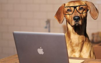 A dog with a Mac laptop and illustrated glasses
