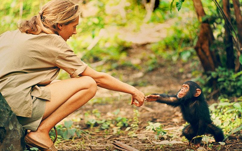 Jane Goodall, chimpanzee infant Flint