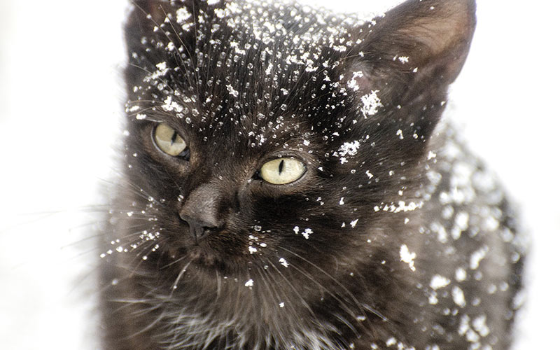 A cute kitten covered in snow
