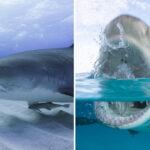 Shark Week and Shark Fest 2019
