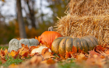 Fall things: pumpkins, leaves, hay, waning light, and new seasons of your favorite reality shows