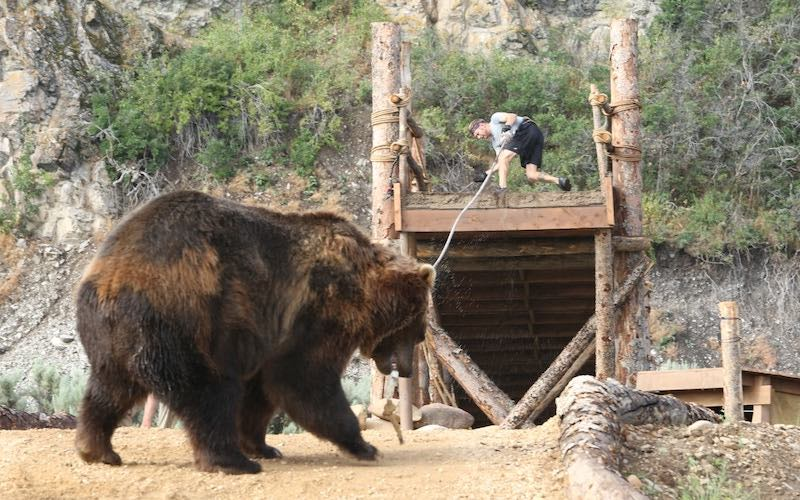 Man vs. Bear: a review, plus interviews with the producers of this insane competition