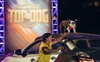 America's Top Dog competitor Minion and trainer Amanda Caldron