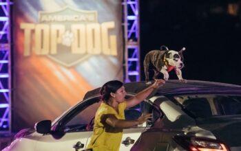 America's Top Dog competitor Minion and trainer Amanda Caldron