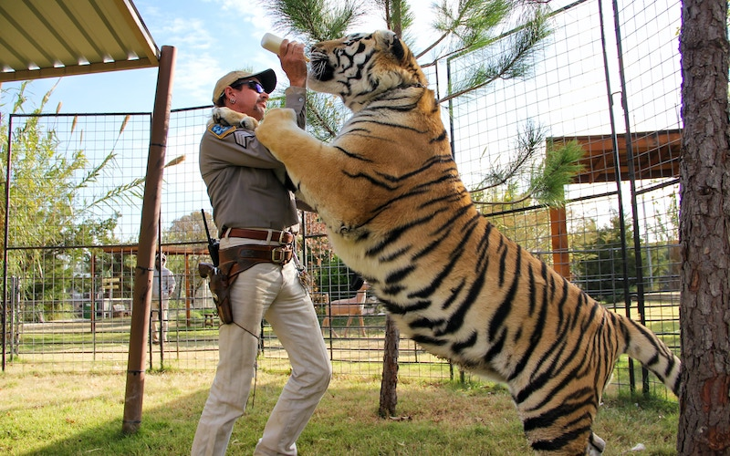 Joe Exotic feeds a tiger on Tiger King