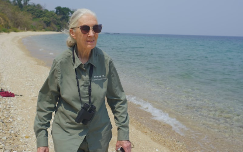 Jane Goodall, whose work and how it's inspiring young people, will be featured in Jane Goodall: The Hope