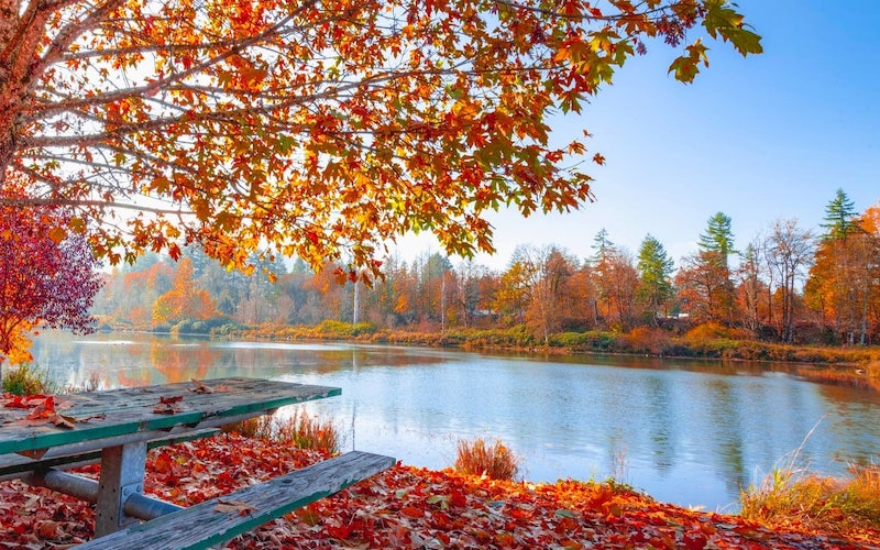 Leaves change as the seasons change, bringing change.