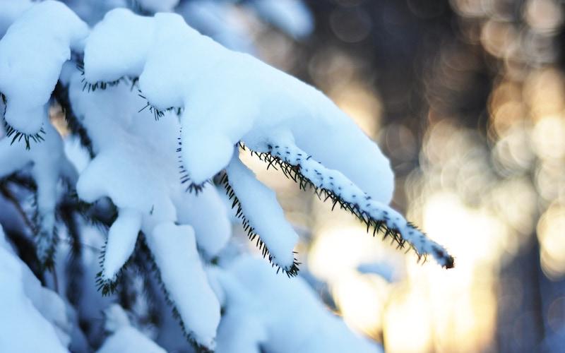 A snowy branch in Kőszeg, Hungary