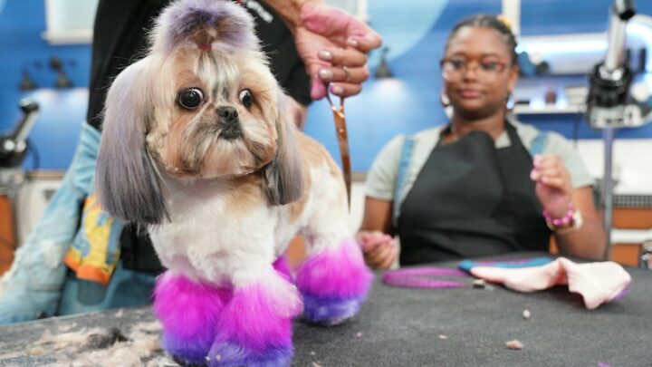 Pooch Perfect and Haute Dog attempt to make dog grooming into amusing TV. Only one succeeds.