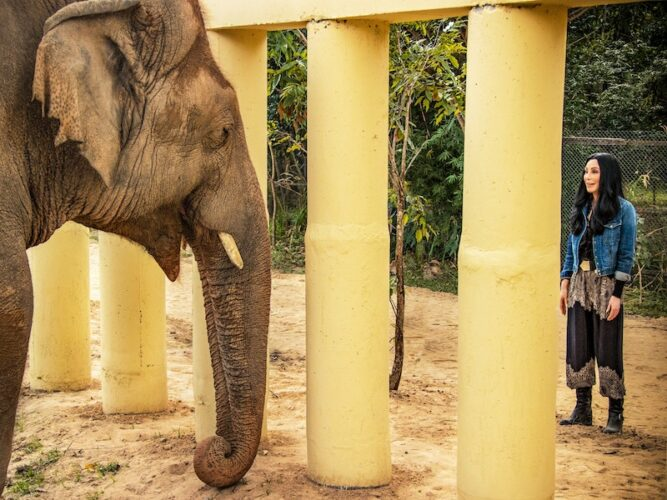 Cher and the elephant Kaavan in Cher and the Loneliest Elephant