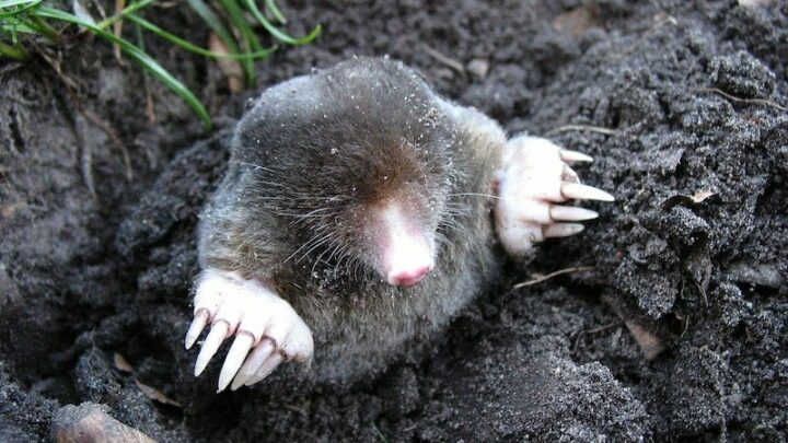 The Mole is back! The Insider is being filmed this summer in Australia