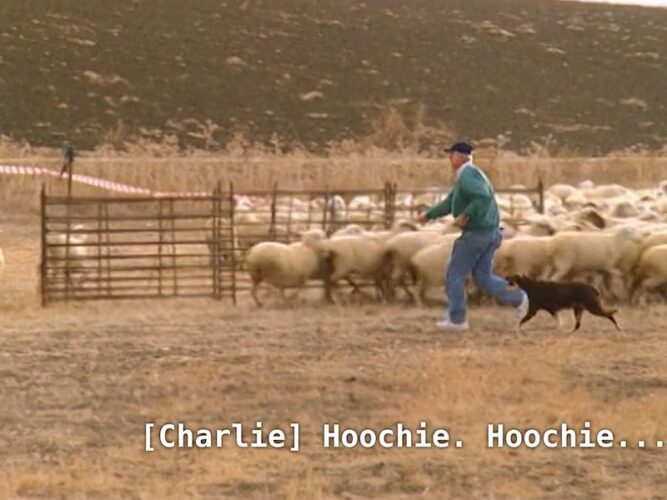 """Charlie gives a command while sheep herding that Netflix's subtitles think is spelled """"hoochie."""""""