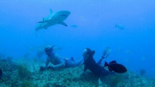 An image from Shark Academy, Shark Week's competition reality show that one actual shark scientist called